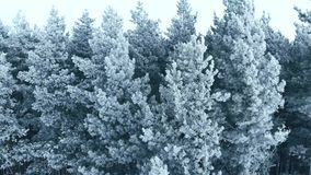 Winter season. Snow forest, aerial shot. Breathtaking natural landscape, frozen forest and dark field road with snow. Winter season. Snow forest, aerial shot stock video