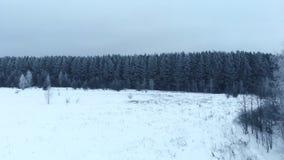 Winter season. Snow forest, aerial shot. Breathtaking natural landscape, frozen forest and dark field road with snow. Winter season. Snow forest, aerial shot stock video footage