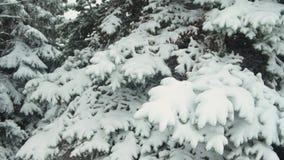 Winter season. Snowy fir trees are in snowstorm. Winter season. Snowy fir trees are in snowstorm stock video