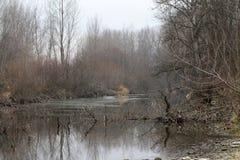 Winter season in Ticino river - Italy. Winter season in Ticino river in Ticino Natural Park - Italy Stock Images