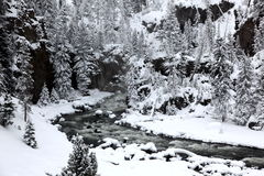 Winter season in Yellowstone Royalty Free Stock Images