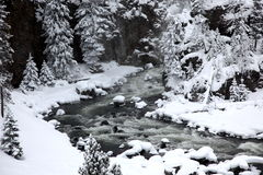 Winter season in Yellowstone Stock Images