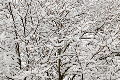 Winter seasonal snow covered tree Royalty Free Stock Image