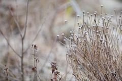 Winter seed head in a frosty landscape royalty free stock photos