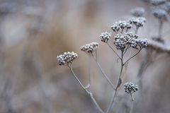 Winter seed head Stock Photo