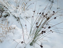 Winter seeds. In snow in a Scandinavian landscape Stock Photo