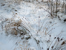 Winter seeds. In snow in a Scandinavian landscape Royalty Free Stock Photography