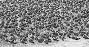 Winter-Seemöwen auf dem Cuyahoga-Fluss, Cleveland, Ohio Lizenzfreies Stockbild