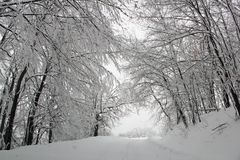Winter in Serbia. Stock Photo of Winter background in Serbia stock photography