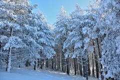 Winter in Serbien Zlatibor 2017 Lizenzfreie Stockfotografie