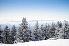 Winter Series 7 royalty free stock images