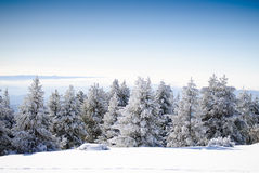 Winter Series 8 Royalty Free Stock Image