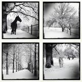 winter set. Royalty Free Stock Images