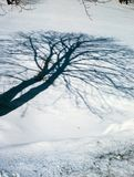 Winter shade tree. Illustrations,snow landscape royalty free stock images