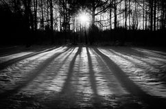 Winter Shadows Royalty Free Stock Photo