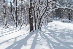 Winter Shadows Stock Photo