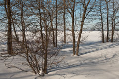 Winter Shadows of Trees with snow Royalty Free Stock Photos