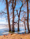 Winter Shore at Lake 2. Bare trees on the shore of a frozen lake royalty free stock image