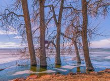 Winter Shore At Barr Lake. This is an image from the shore of Barr Lake, at Barr Lake State Park, in Brighton, Colorado, in the Winter. The lake is mostly frozen stock photos