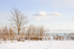 Winter shore of lake Ontario Stock Photo