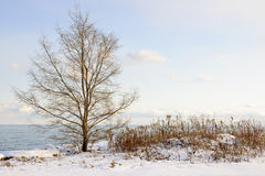 Winter shore of lake Ontario Royalty Free Stock Photography