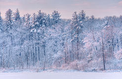 Winter Shoreline. Winter landscape at sunrise of the snow flocked shoreline of Lake Allegan, Allegan State Forest, Michigan, USA Royalty Free Stock Photography
