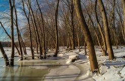 Winter Shoreline. Stock Image