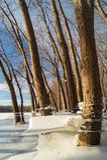 Winter Shoreline. Royalty Free Stock Image