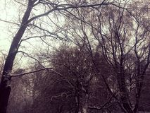 Winter. Shot taken while in woods Royalty Free Stock Photography