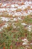 Winter shrub Stock Images