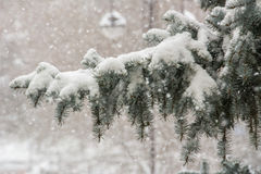 winter in Siberia Stock Photography