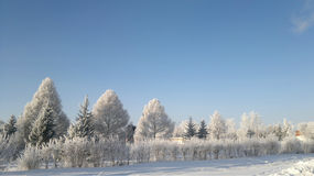 Winter Siberia Taiga snow frost Stock Photos