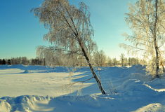 Winter Siberian. The winter Siberian came to forest-steppes of Altai Royalty Free Stock Photography