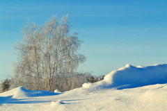 Winter Siberian. The winter Siberian came to forest-steppes of Altai Royalty Free Stock Photo