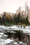 Winter Siberian landscape. The river does not freeze in winter. Larch in yellow needles. Royalty Free Stock Image