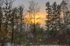 Winter Siberian landscape. Sunset in the forest. Bright and yellow royalty free stock images