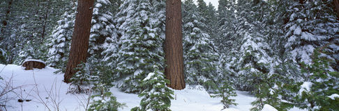 Winter in the Sierra Mountains, California Stock Photos