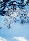 Winter silence royalty free stock photos