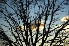 Winter silhouette. A leafless tree silhouetted against a late afternoon winter sky Royalty Free Stock Photography