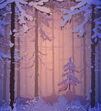 Winter. Silhouette of winter coniferous forest, colors of the sunset,  illustration Royalty Free Stock Image