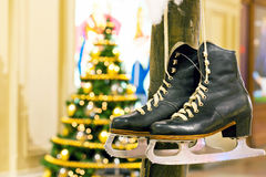 Winter Skates weighing on the tree Royalty Free Stock Photos