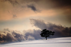 Winter sky Stock Photography