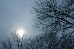 Winter sky. At sunset Royalty Free Stock Photography