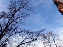 Winter sky with bare trees in Berlin stock image