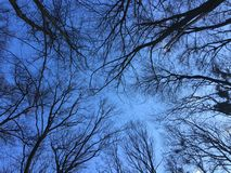 Winter sky Royalty Free Stock Photo
