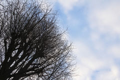 Winter sky and dead tree Royalty Free Stock Images