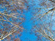 Winter sky in a forest Royalty Free Stock Images