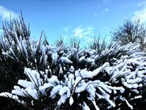 Winter sky with frozen plant background Royalty Free Stock Image