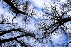 Winter sky in the old forest Stock Photos