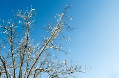 Winter Sky with snow on tree branches Stock Photos